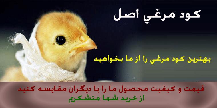 قیمت روز کود مرغی